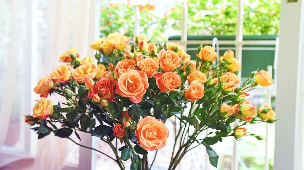 orange flowers on white ceramic vase