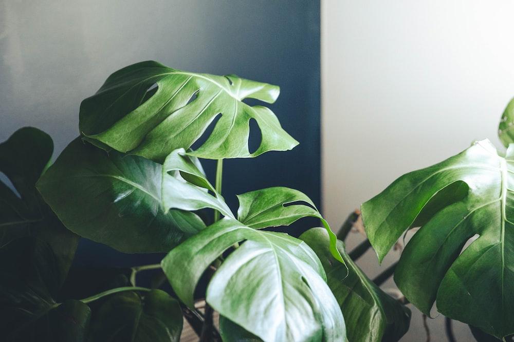 green leaves near white wall