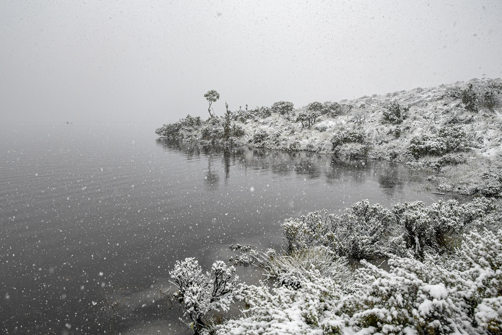 snow covered trees and plants on body of water