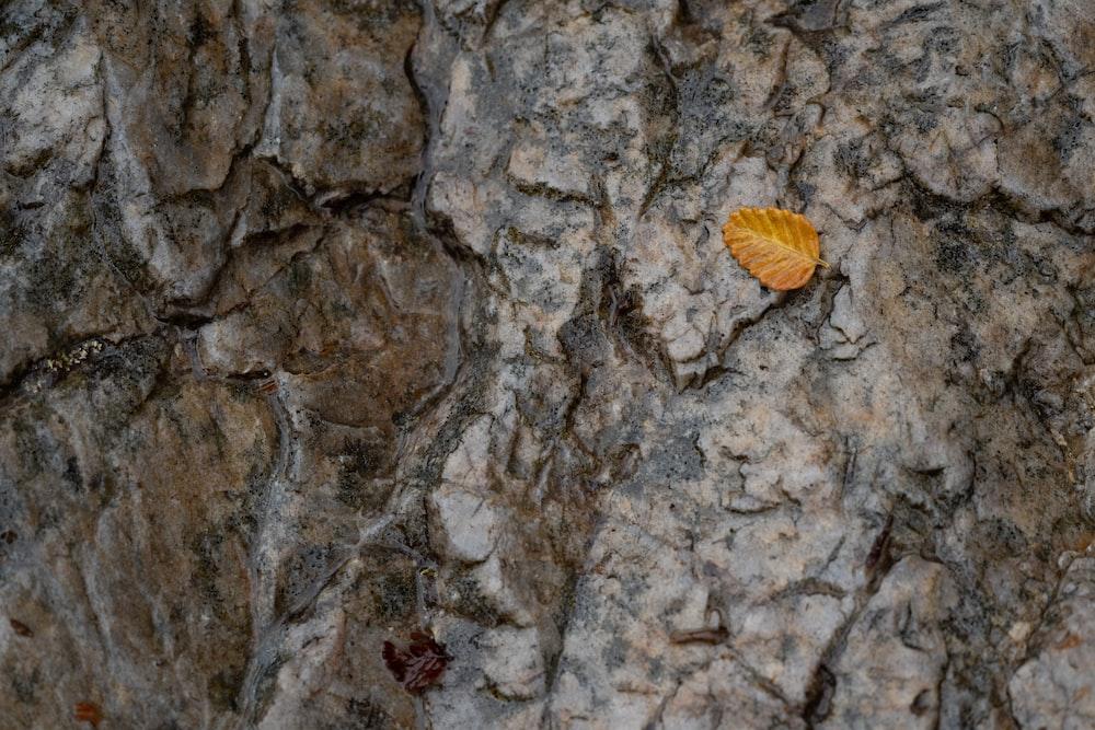 brown leaf on brown rock