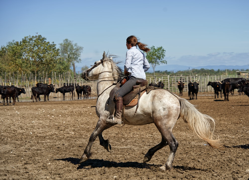 woman in white long sleeve shirt riding brown horse during daytime