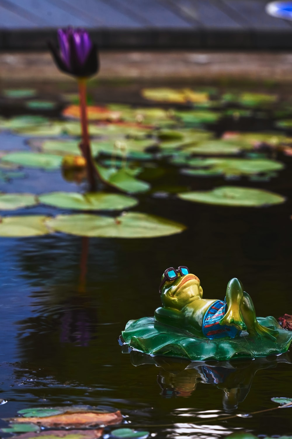 green frog on green water lily
