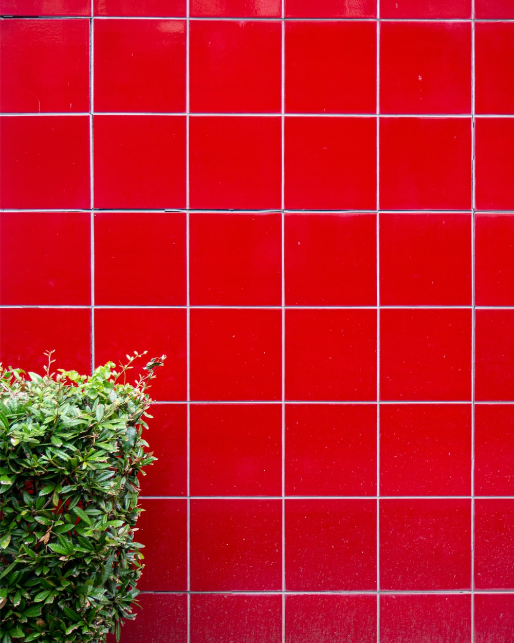 green plant on red wall