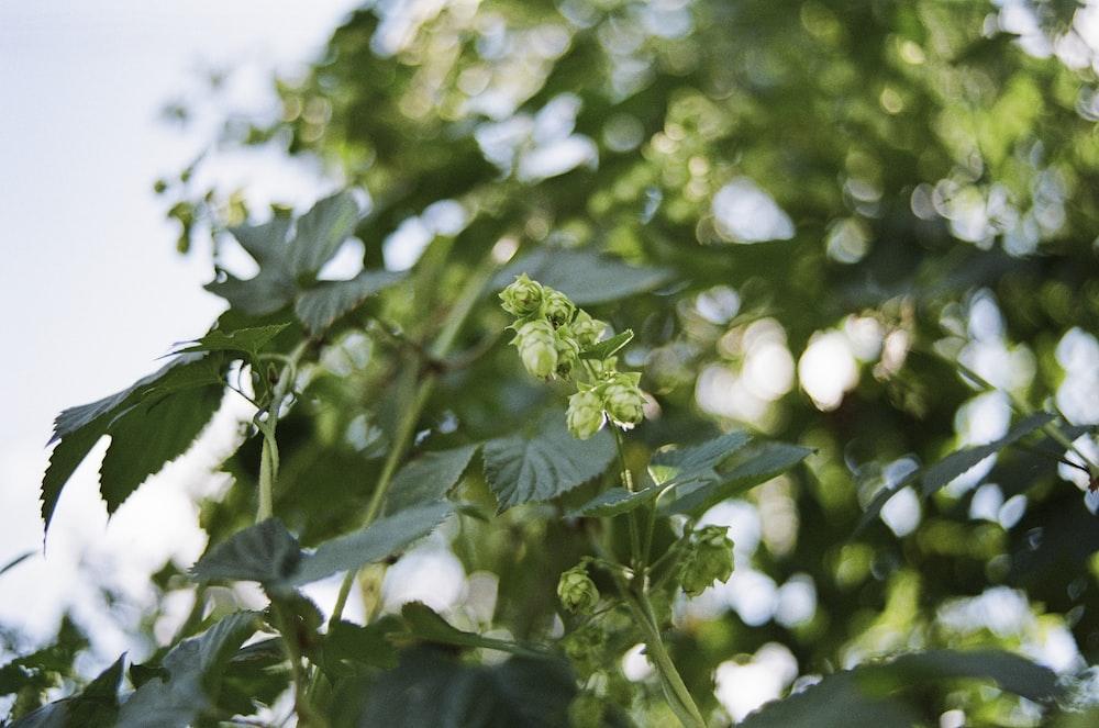 green leaves in tilt shift lens