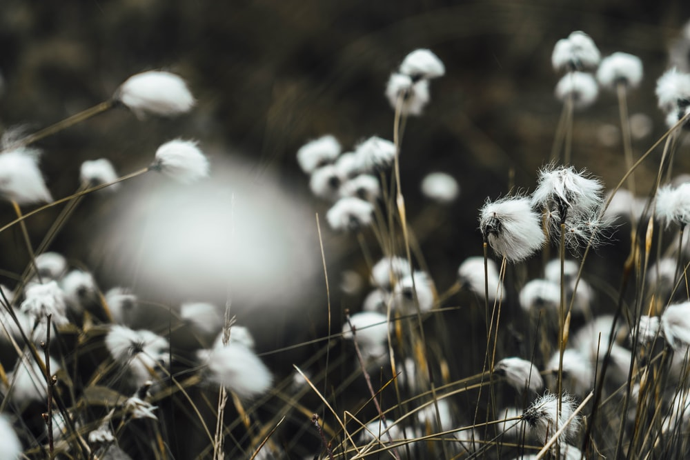white flowers in grayscale photography