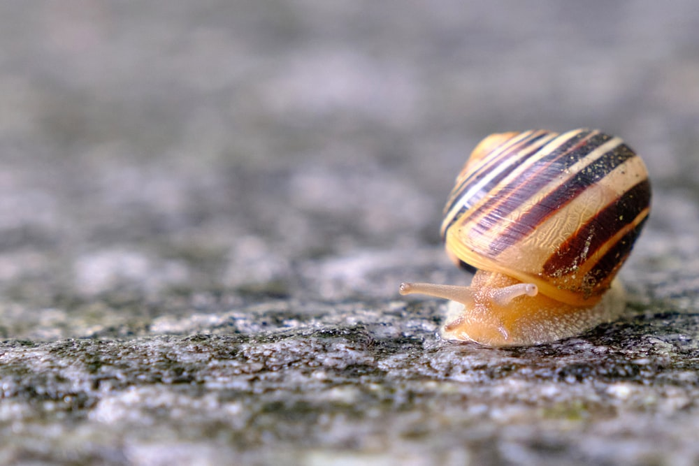brown snail on gray concrete floor