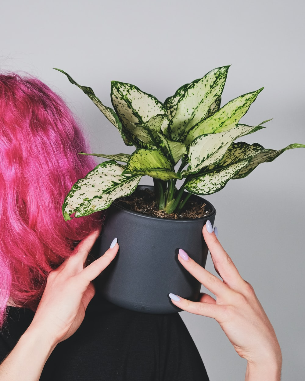 person holding green plant on black pot