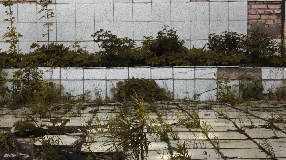 green plant near white wall tiles