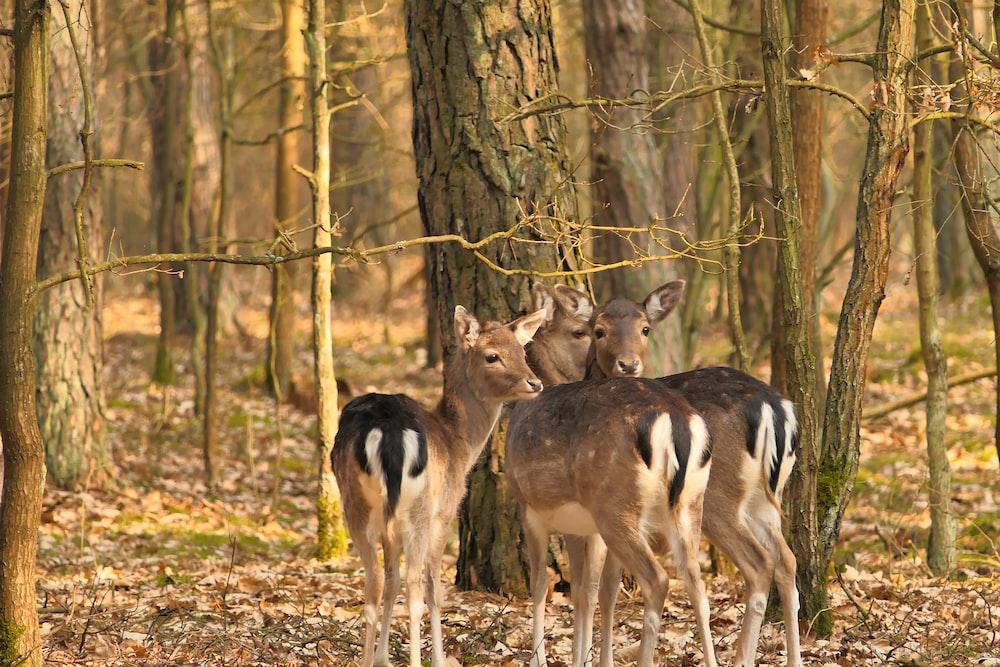 brown deer standing on brown grass field during daytime