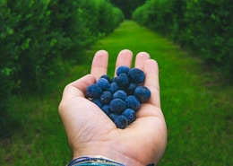 person holding blue berries during daytime