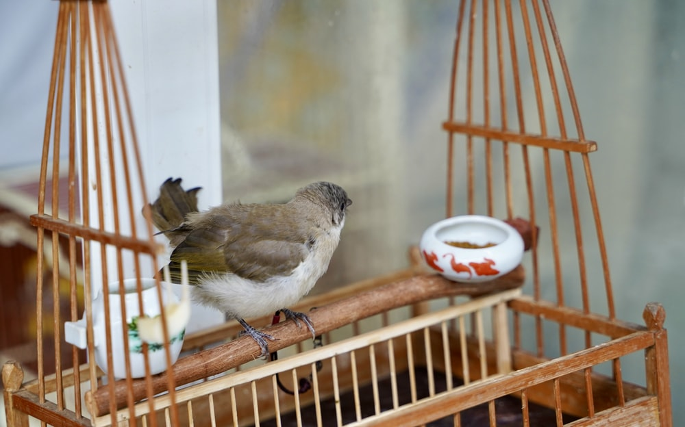 white and brown feathered bird on brown wooden bird cage