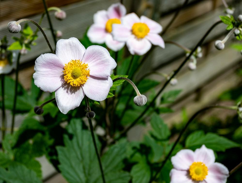 white and yellow flower in tilt shift lens
