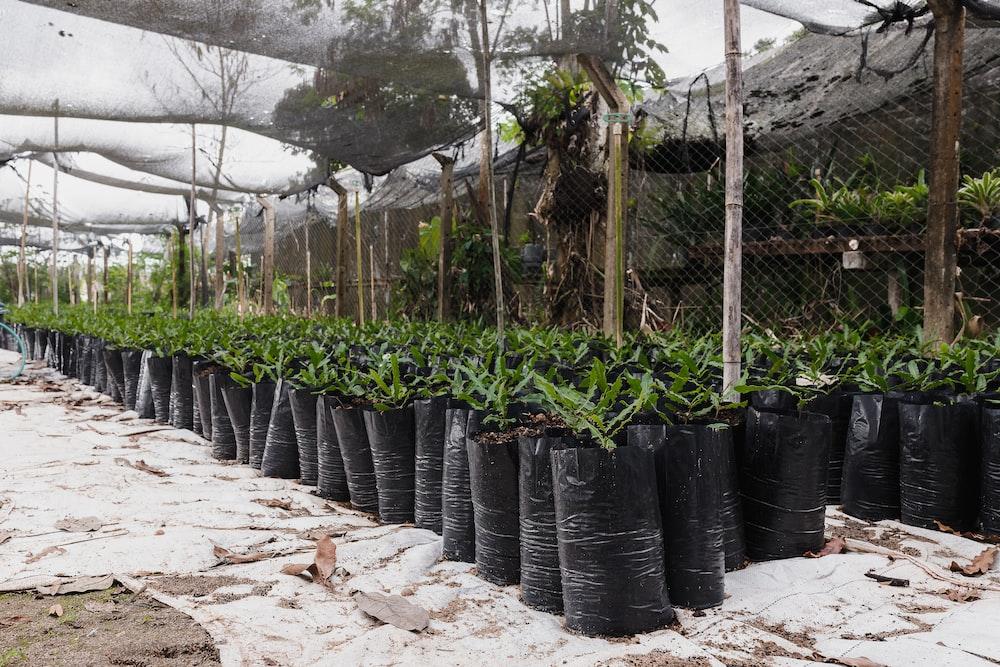 green plants on black plastic pots