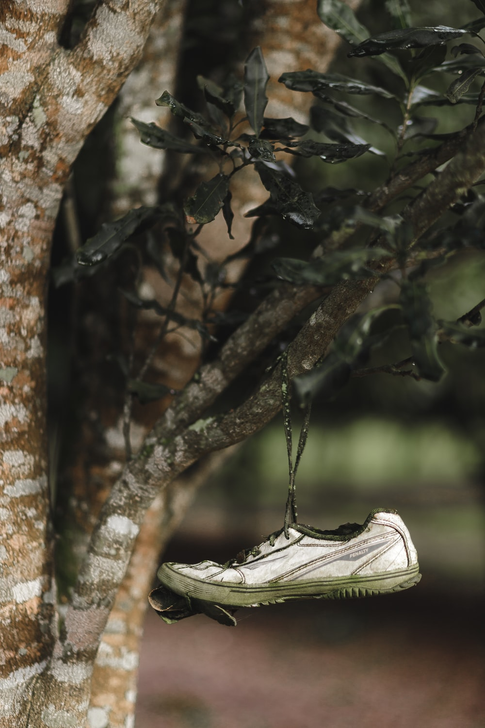 white low top sneakers on brown tree branch