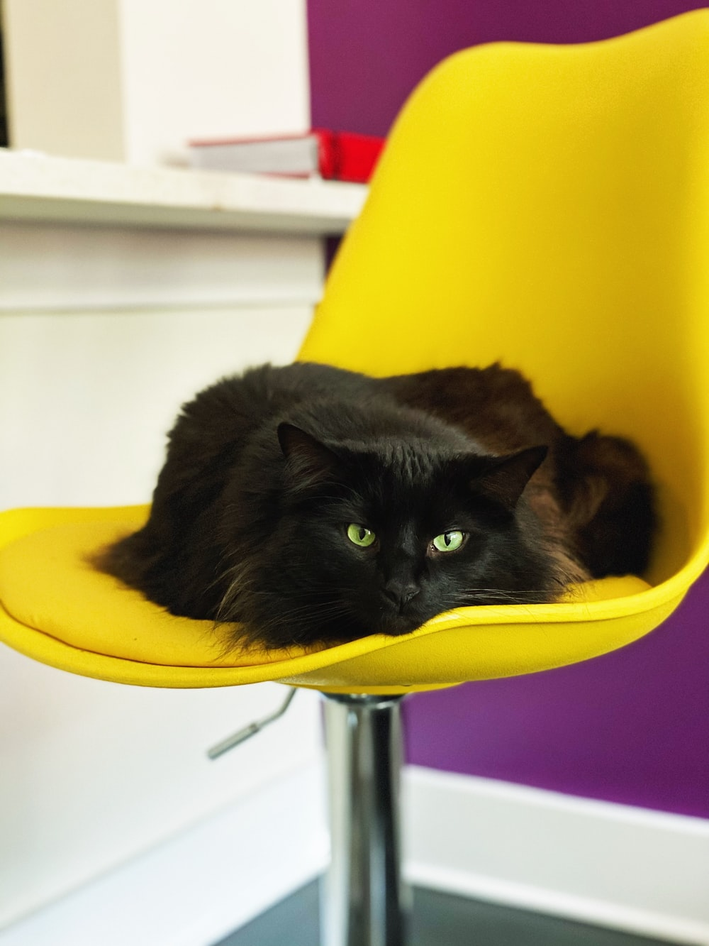 black cat on yellow chair