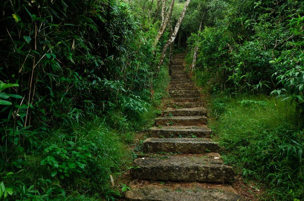 brown wooden stairs between green plants