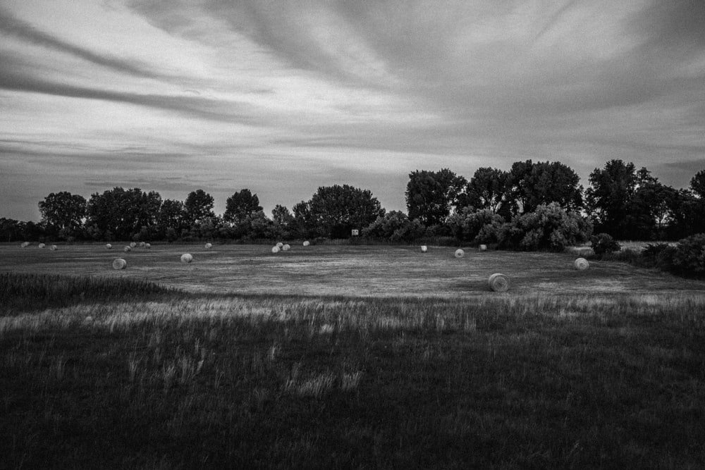 grayscale photo of grass field and trees