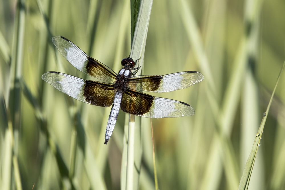 brown and black dragonfly on green grass during daytime