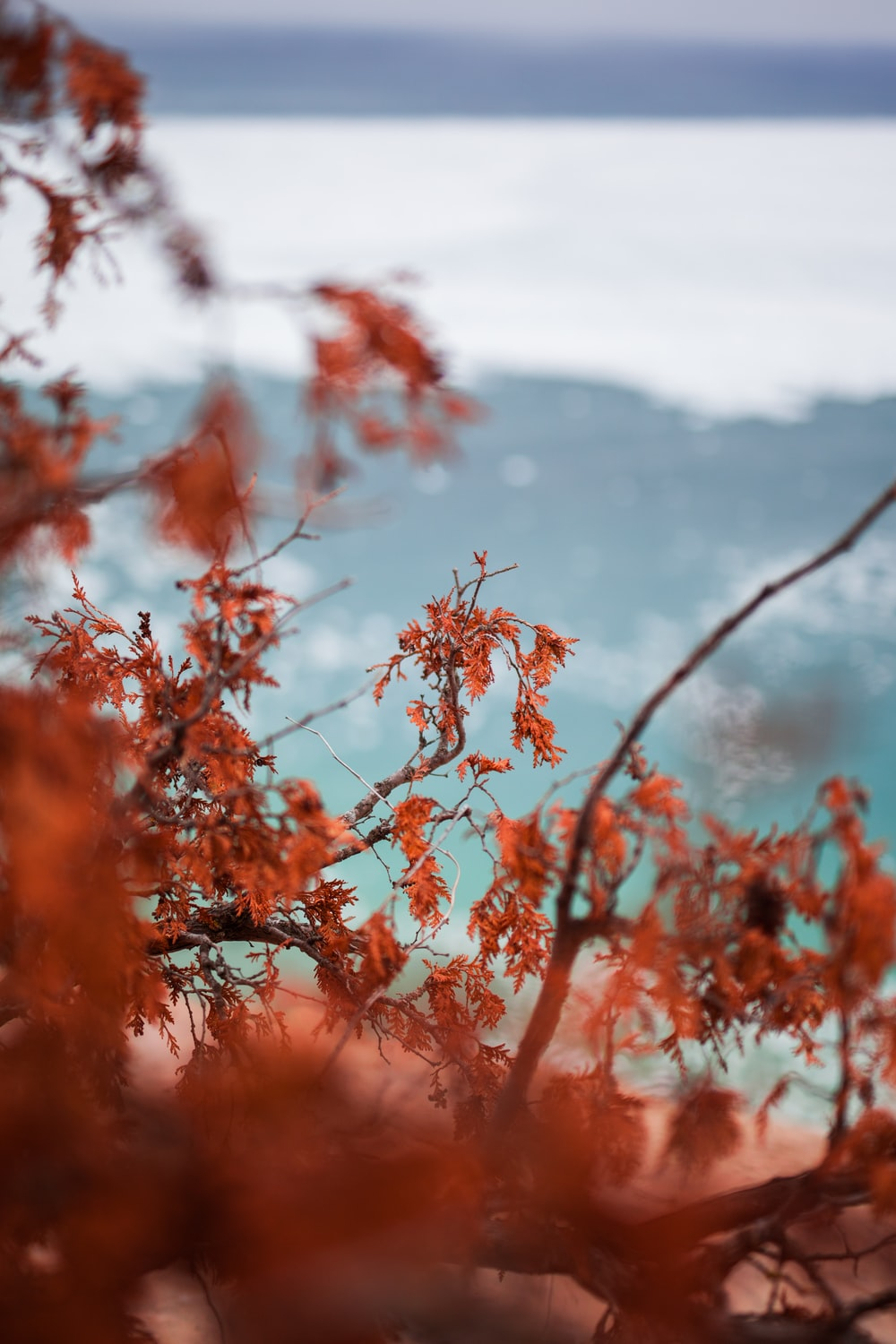 red leaves tree during daytime