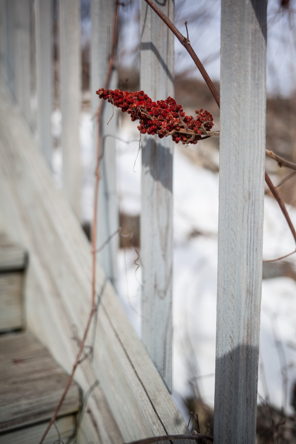 red flower on white wooden fence