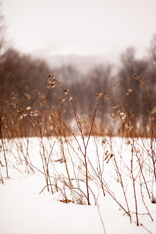 brown grass on white snow field during daytime