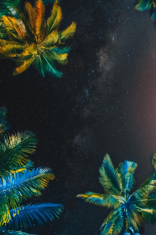 green palm tree under starry night