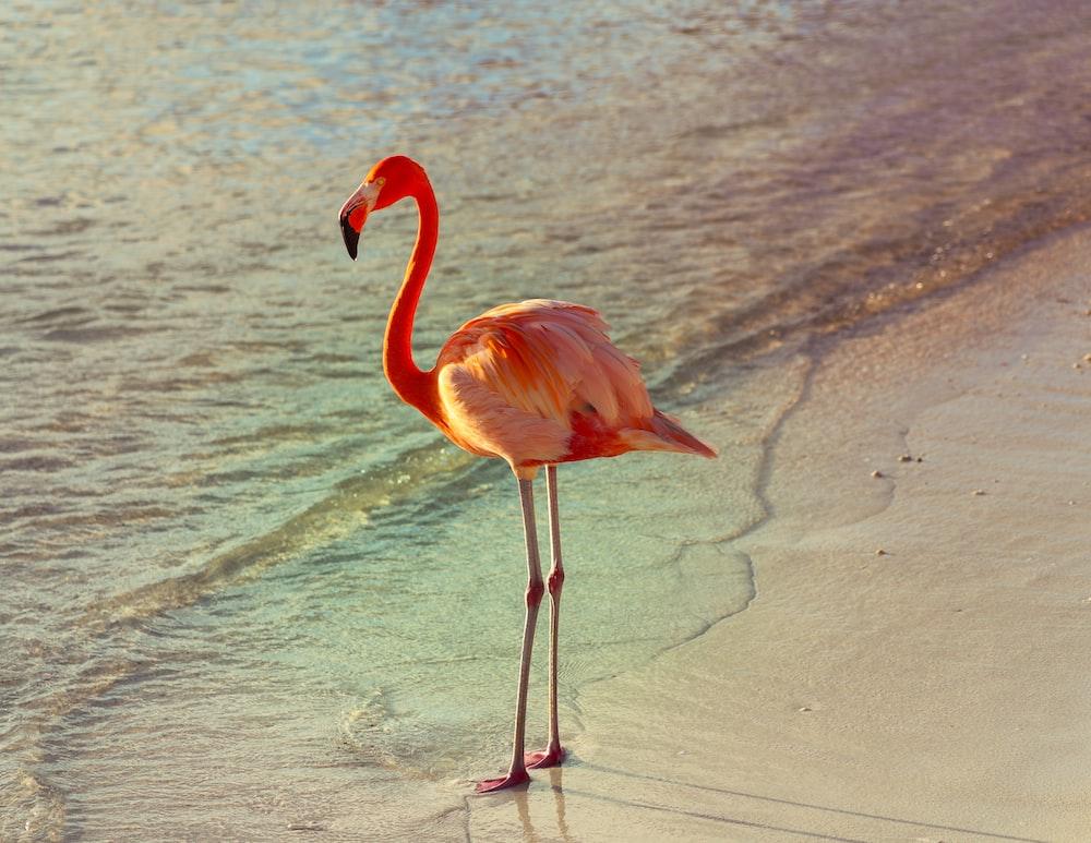 pink flamingo on brown sand during daytime