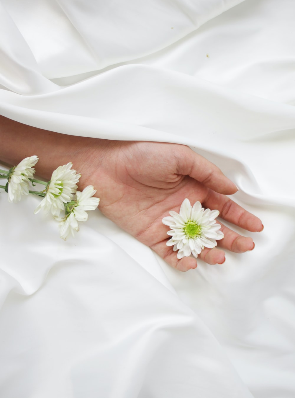 white flower on persons hand