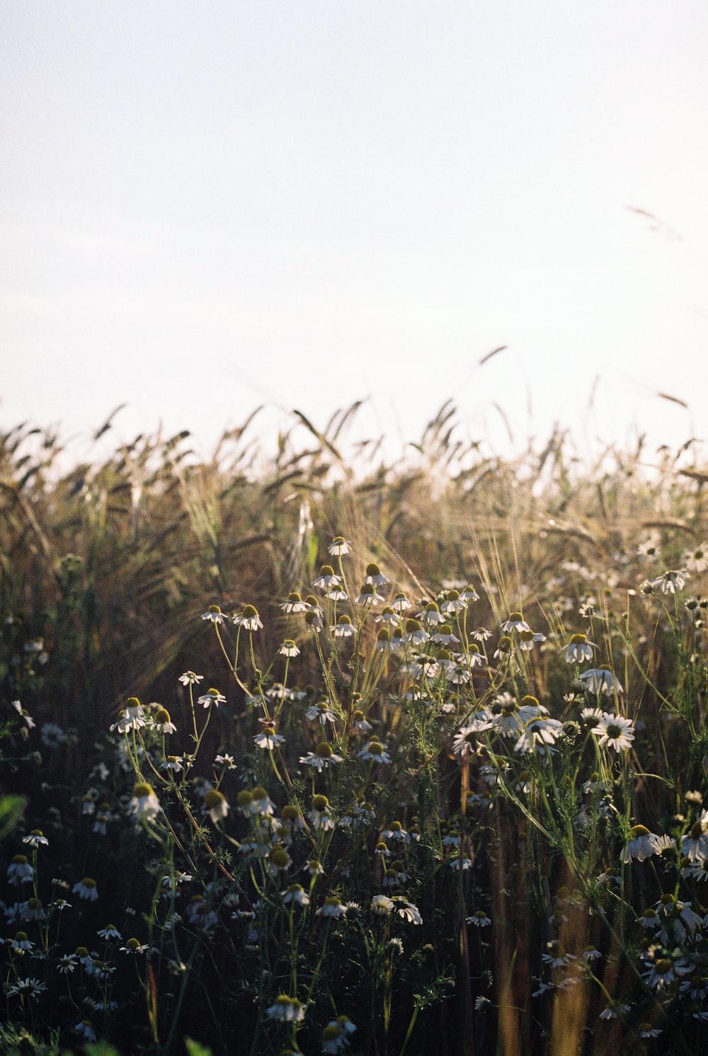 blue flower field during daytime