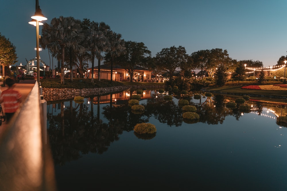 body of water near trees during night time