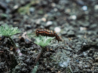 brown and black caterpillar on green plant