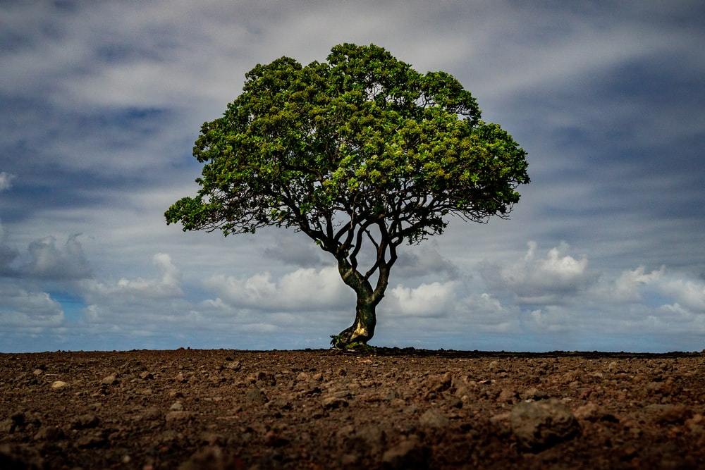 green tree on brown field under white clouds and blue sky during daytime