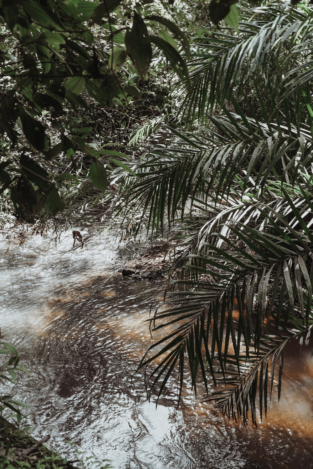 green palm tree near water falls
