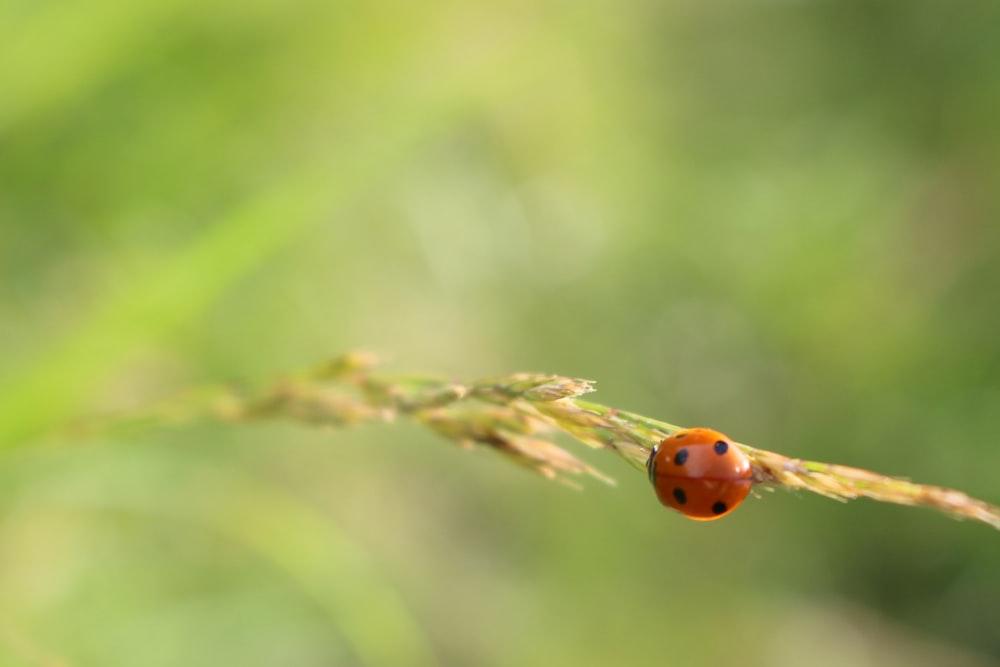 orange ladybug on green grass during daytime