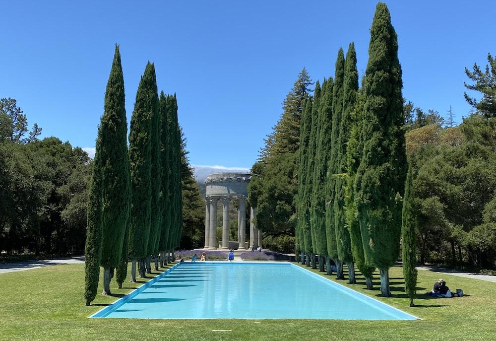 green trees near swimming pool during daytime