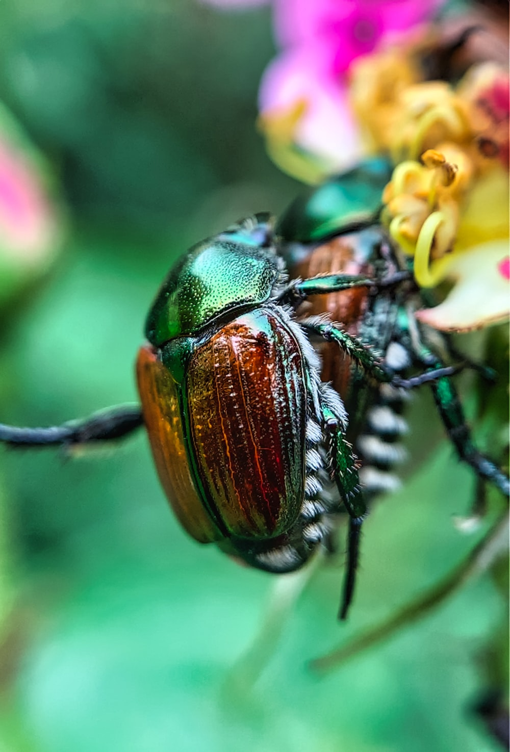 green and black beetle perched on yellow flower in close up photography during daytime