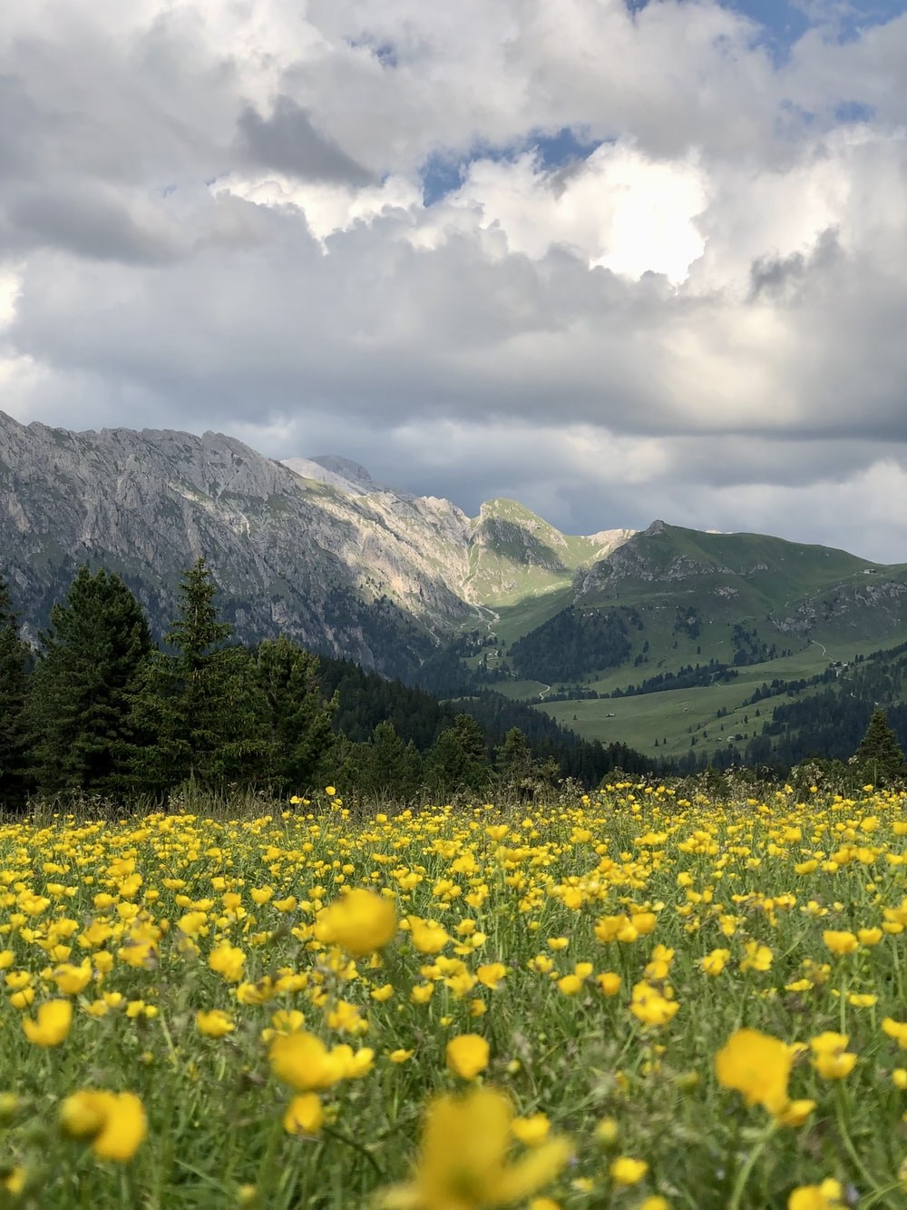 yellow flower field near green mountains under white clouds during daytime