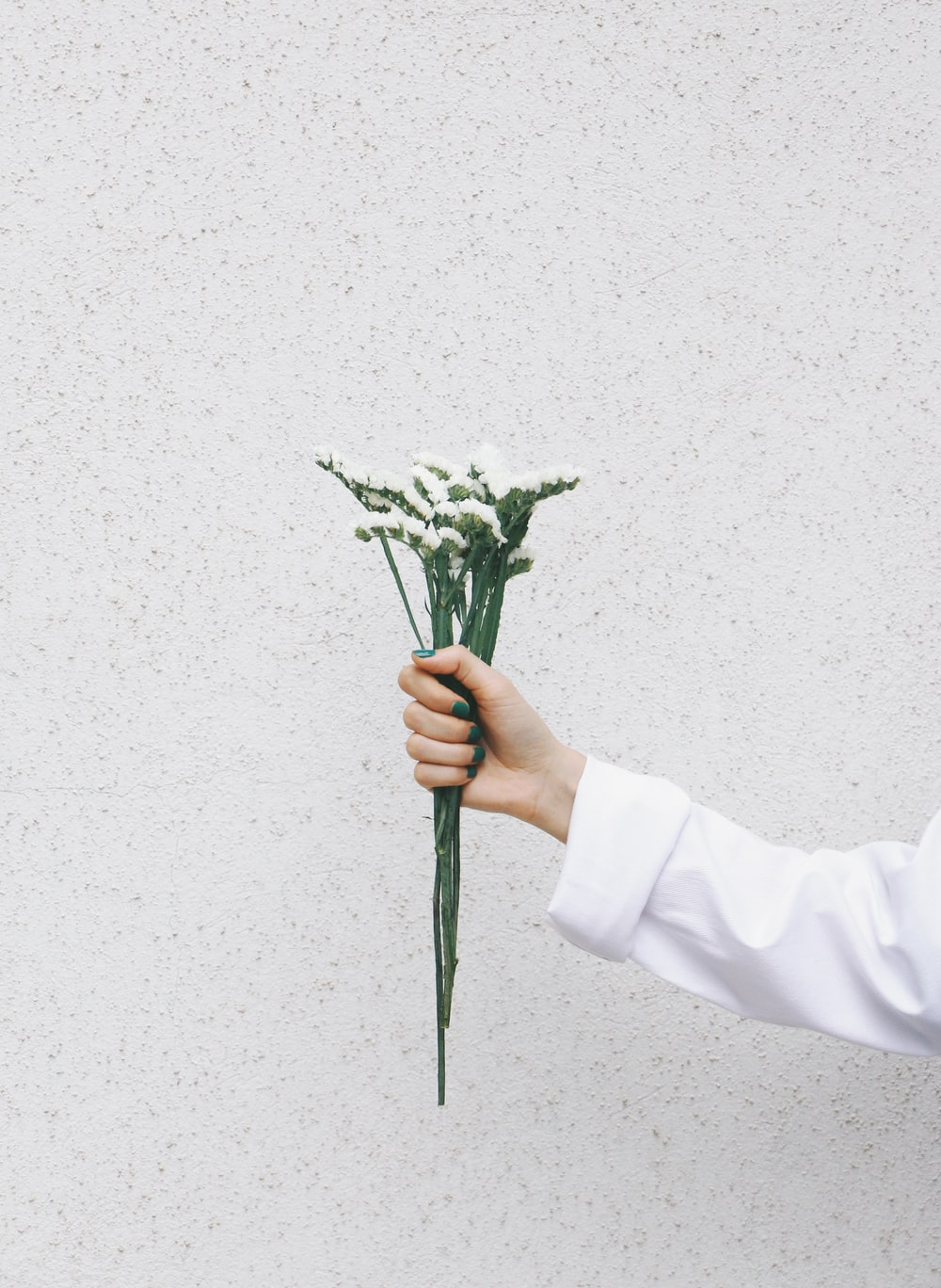 person holding green plant with white background