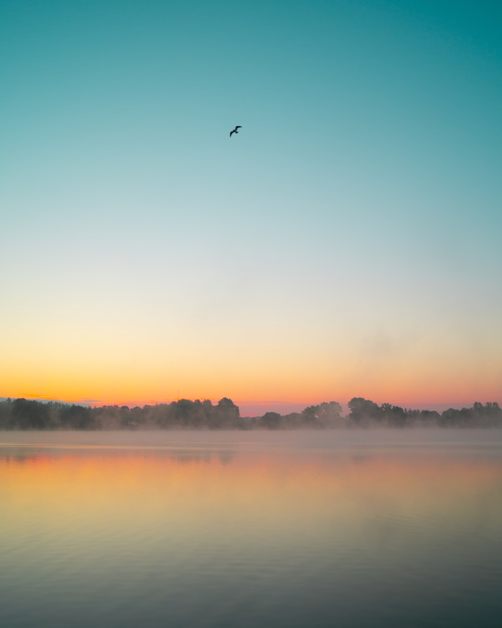 bird flying over the lake during sunset