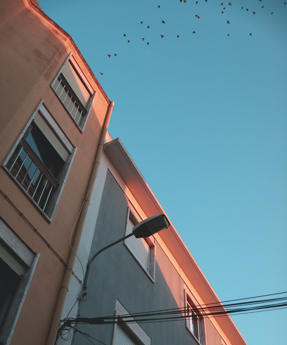 flock of birds flying over brown concrete building during daytime