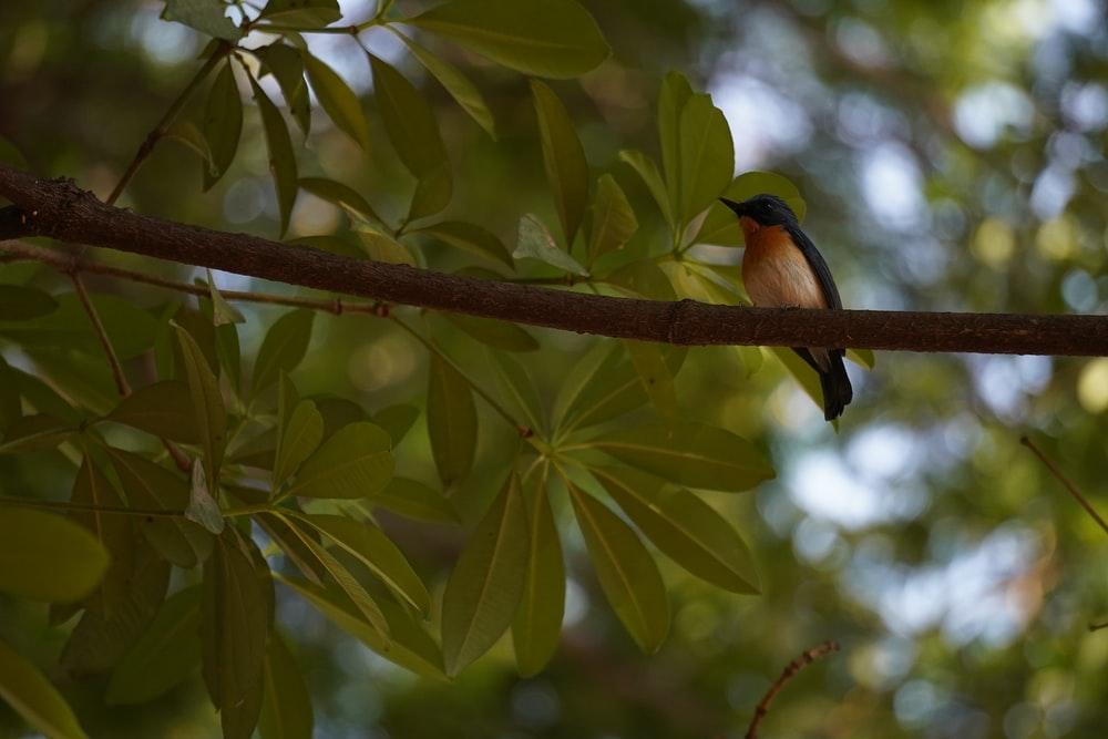 black and brown bird on tree branch during daytime