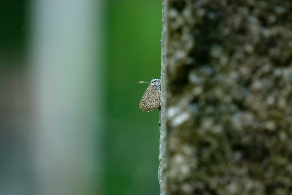 brown moth on green wall
