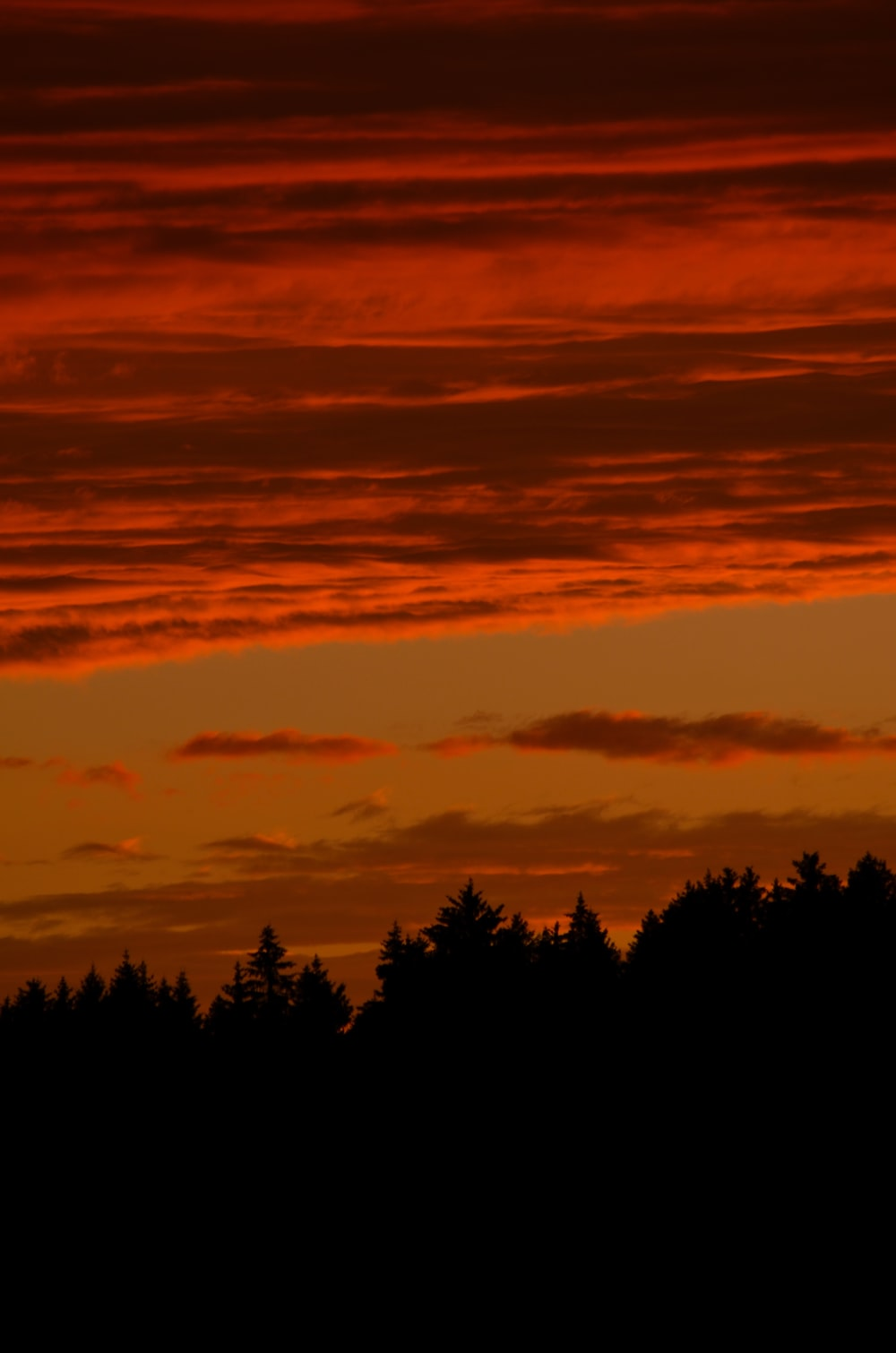 silhouette of trees under cloudy sky during sunset