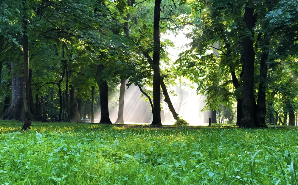 green grass and trees during daytime
