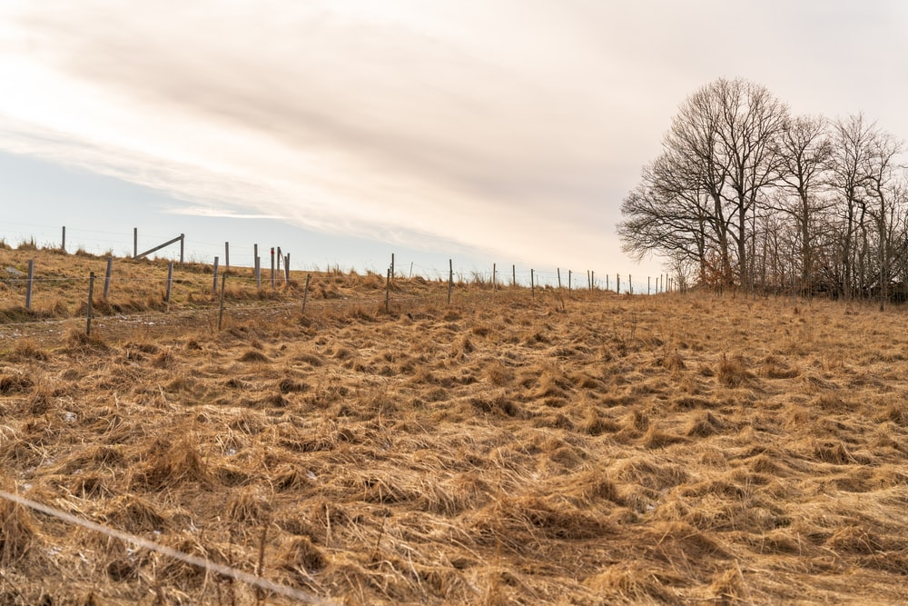 brown grass field with bare trees under white clouds during daytime