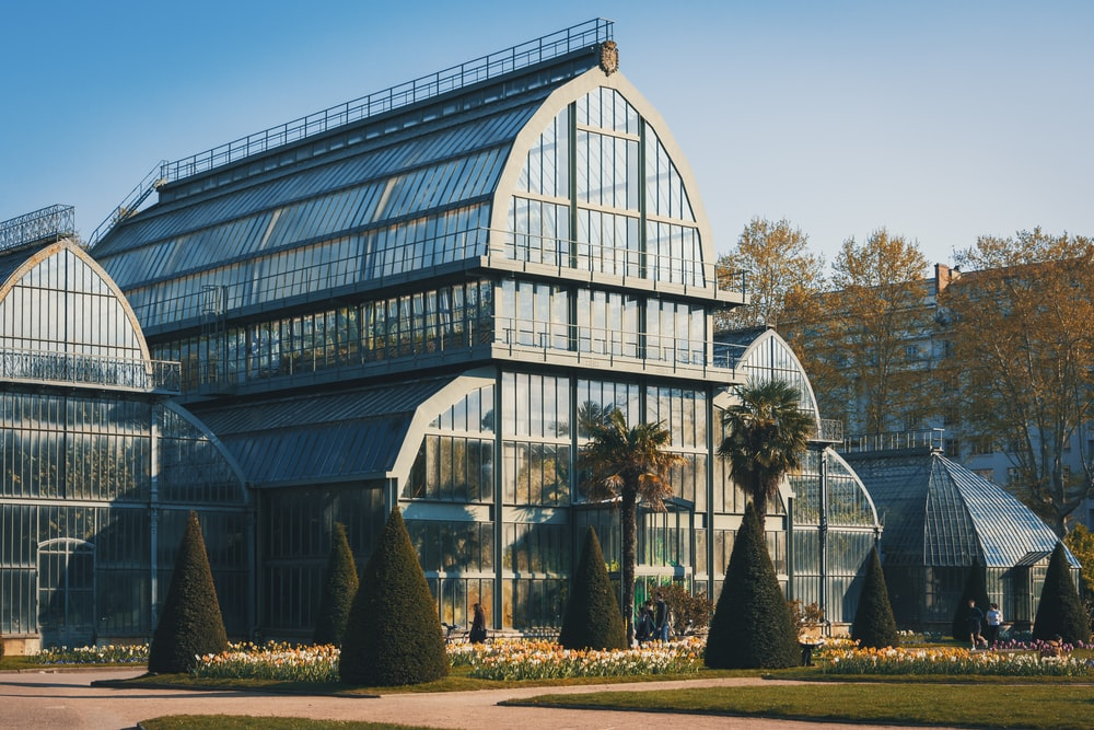 green trees in greenhouse during daytime