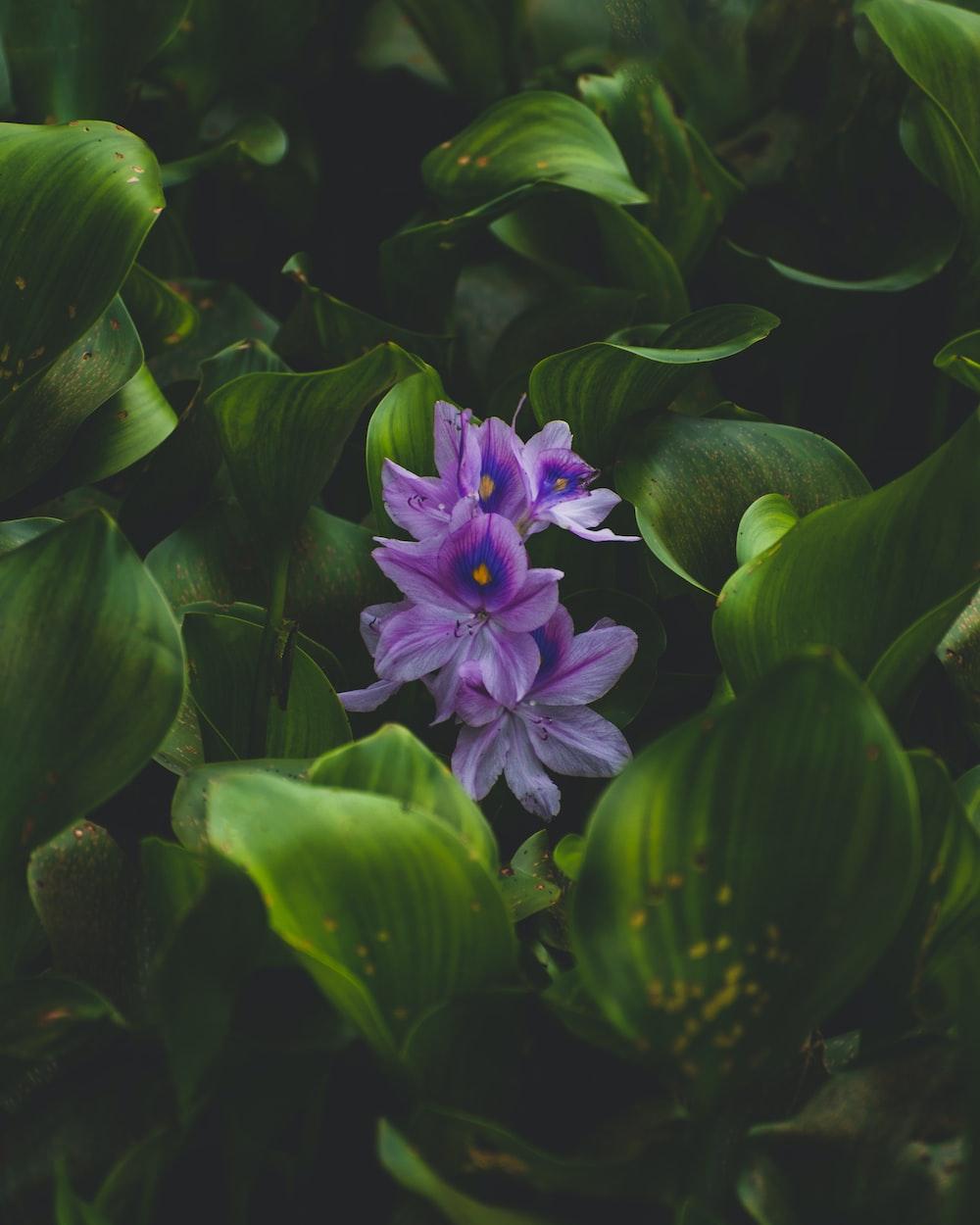 purple flower in green leaves
