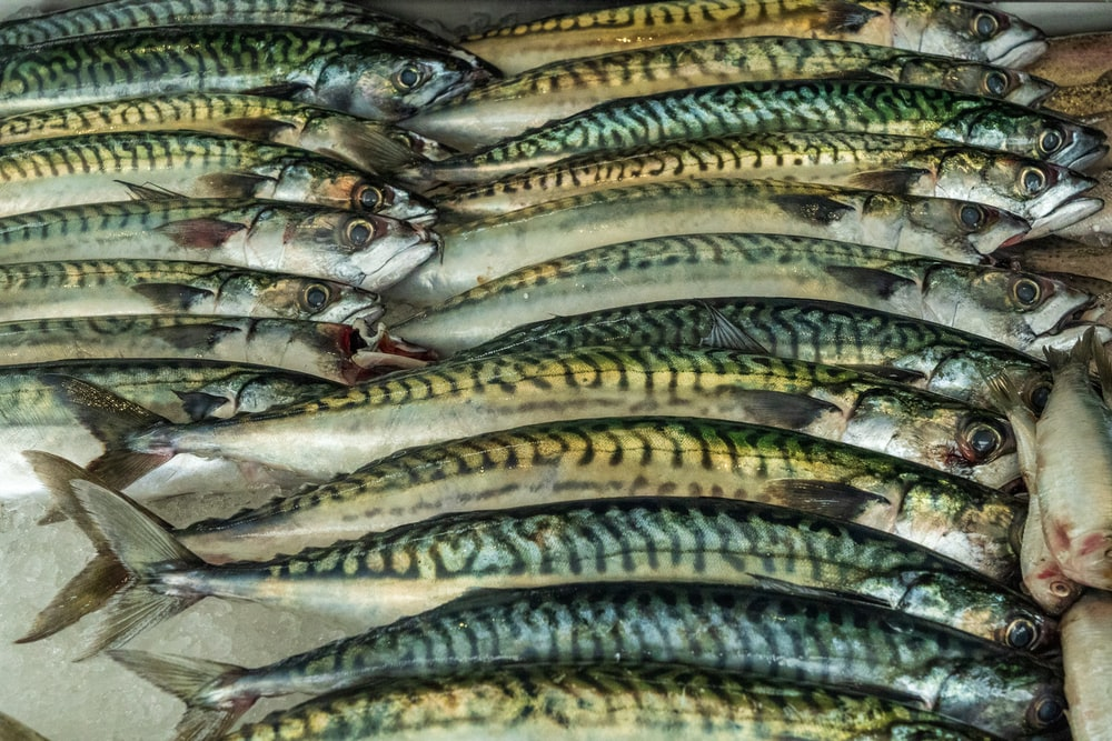 silver and yellow fish on black surface