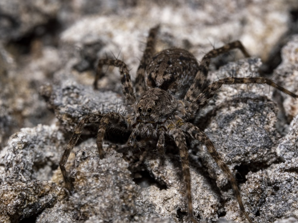 brown spider on gray rock