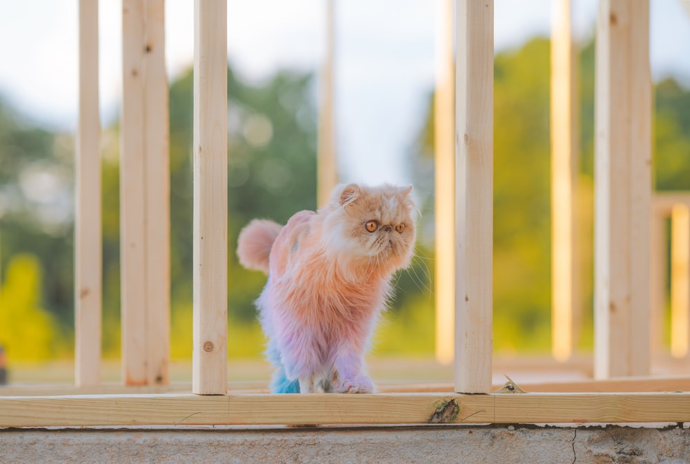 white long fur cat on brown wooden fence during daytime